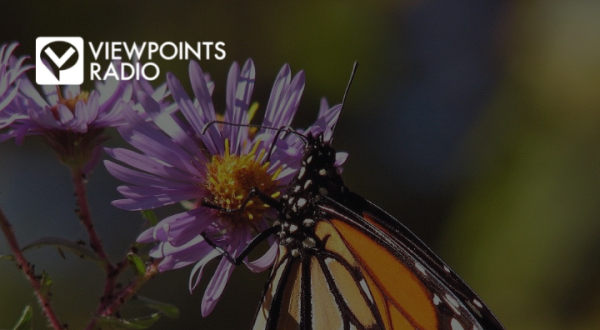 The Mind-Bending Migration Of The Monarch Butterfly