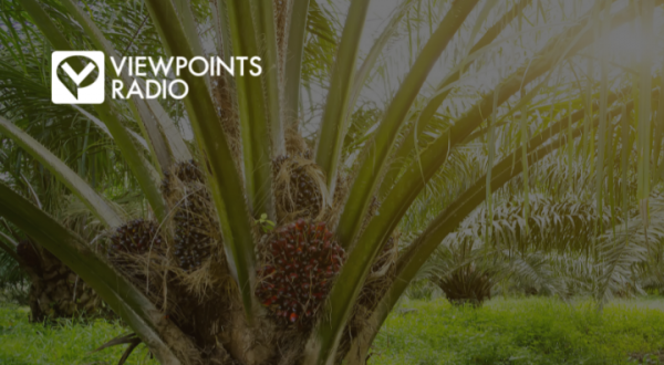 21-24 Segment 1: The Environmental Effects Of Staggering Palm Oil Production